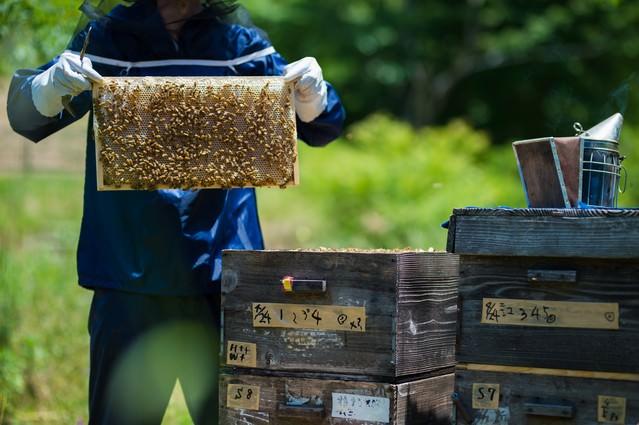 養蜂場の蜜板と養蜂家の写真