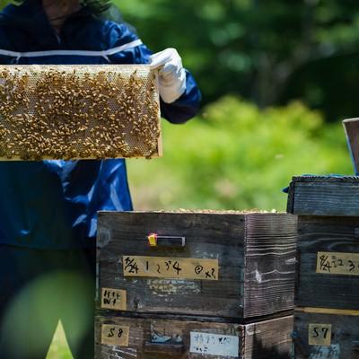 「養蜂場の蜜板と養蜂家」の写真素材