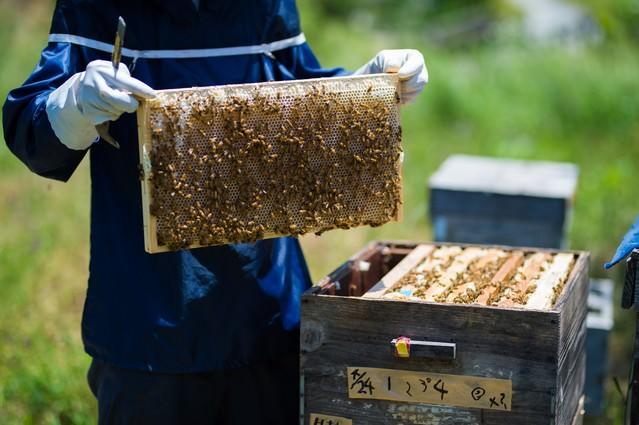 養蜂場の蜜板を見せる養蜂家の写真