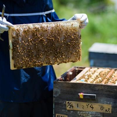 「養蜂場の蜜板を見せる養蜂家」の写真素材
