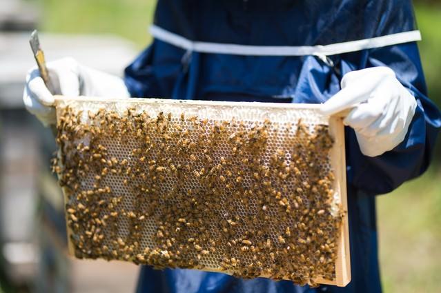蜜板を持った養蜂家の写真