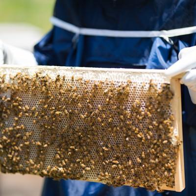 「蜜板を持った養蜂家」の写真素材