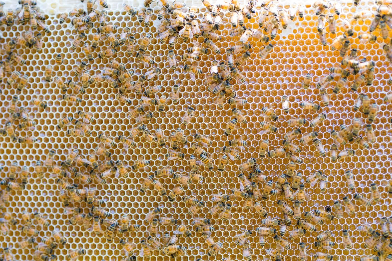 「ハチミツを熟成させているところ」の写真