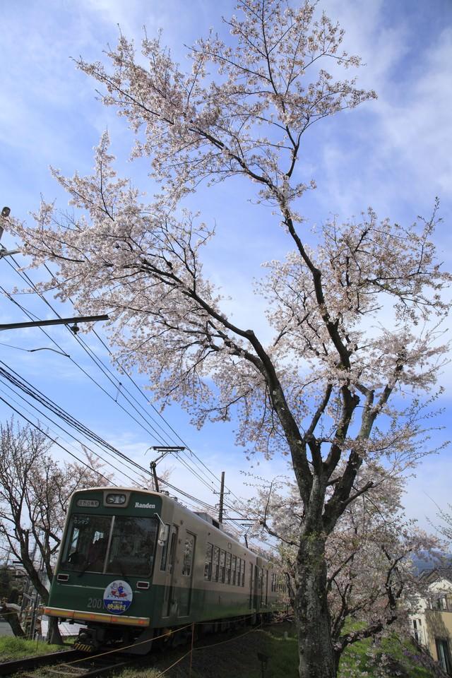 青空の中走る電車と桜の写真