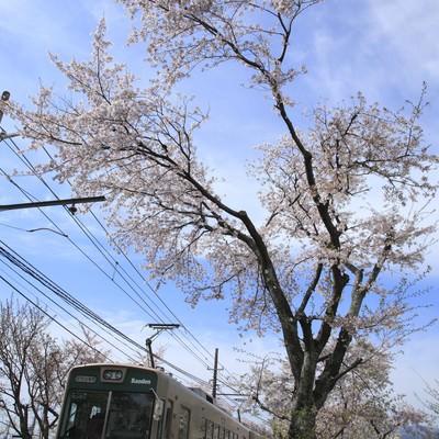 「青空の中走る電車と桜」の写真素材
