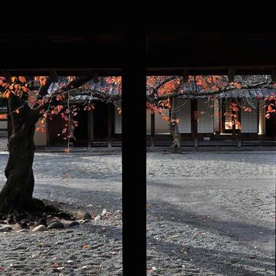 「文武学校の中庭」の写真素材
