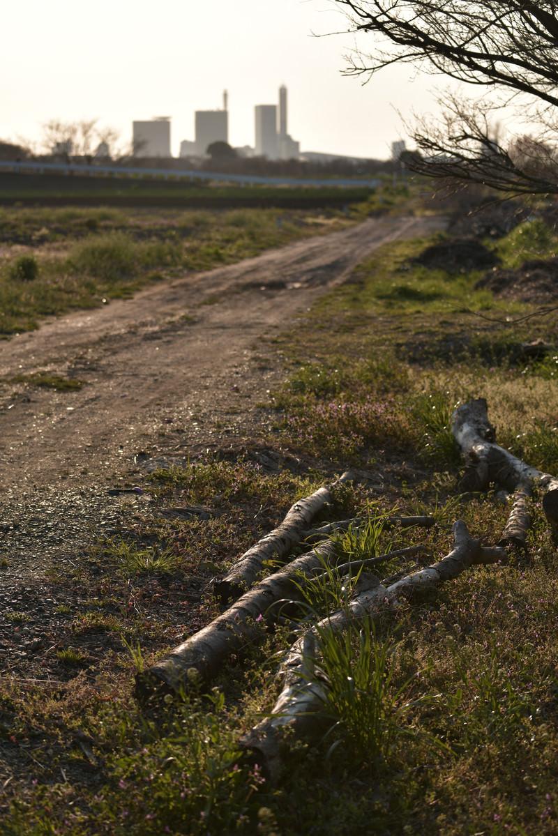 「舗装されていない農道と倒木」の写真