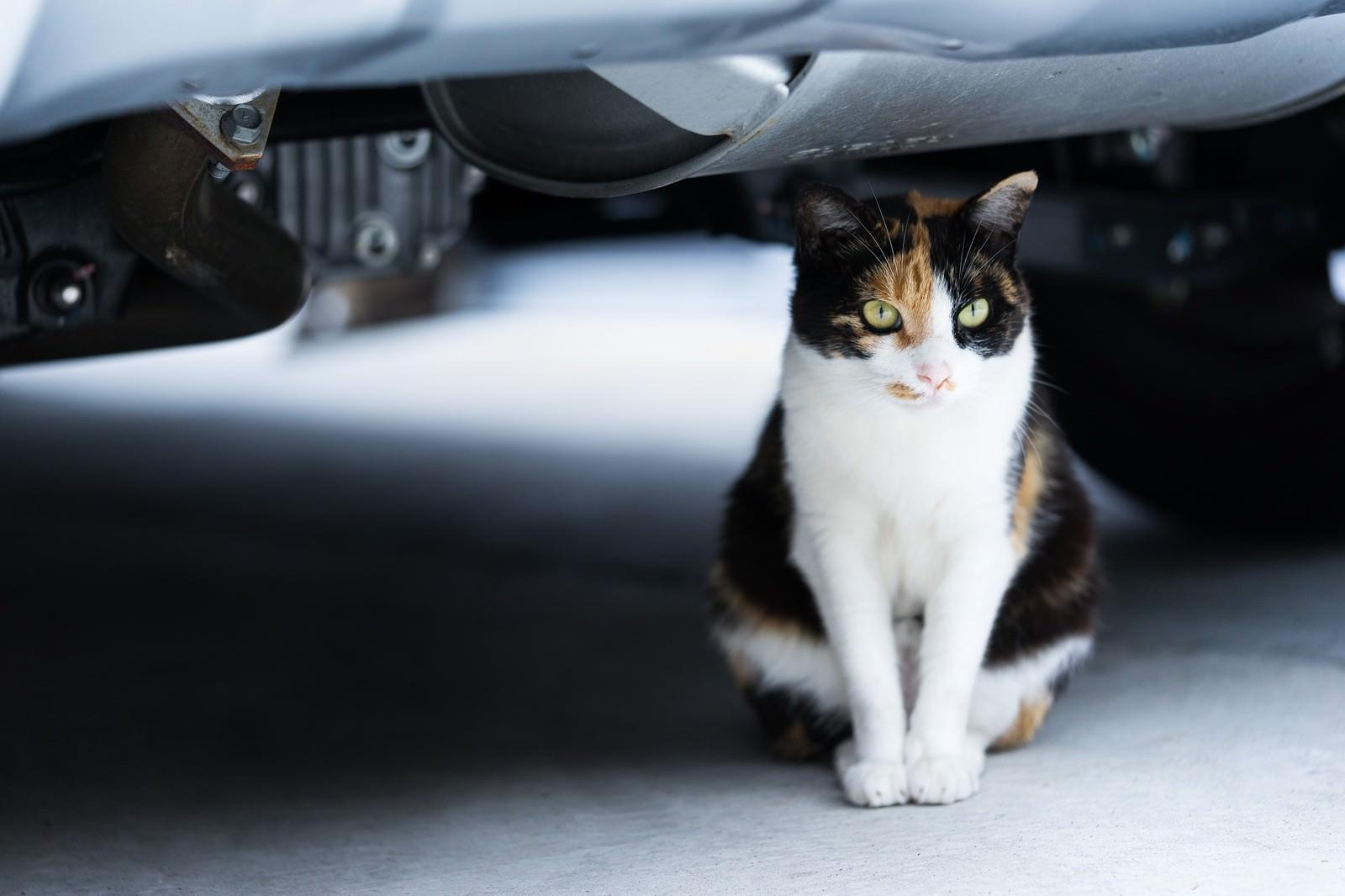 「車の下のにゃんこ車の下のにゃんこ」のフリー写真素材を拡大