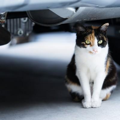 「車の下のにゃんこ」の写真素材