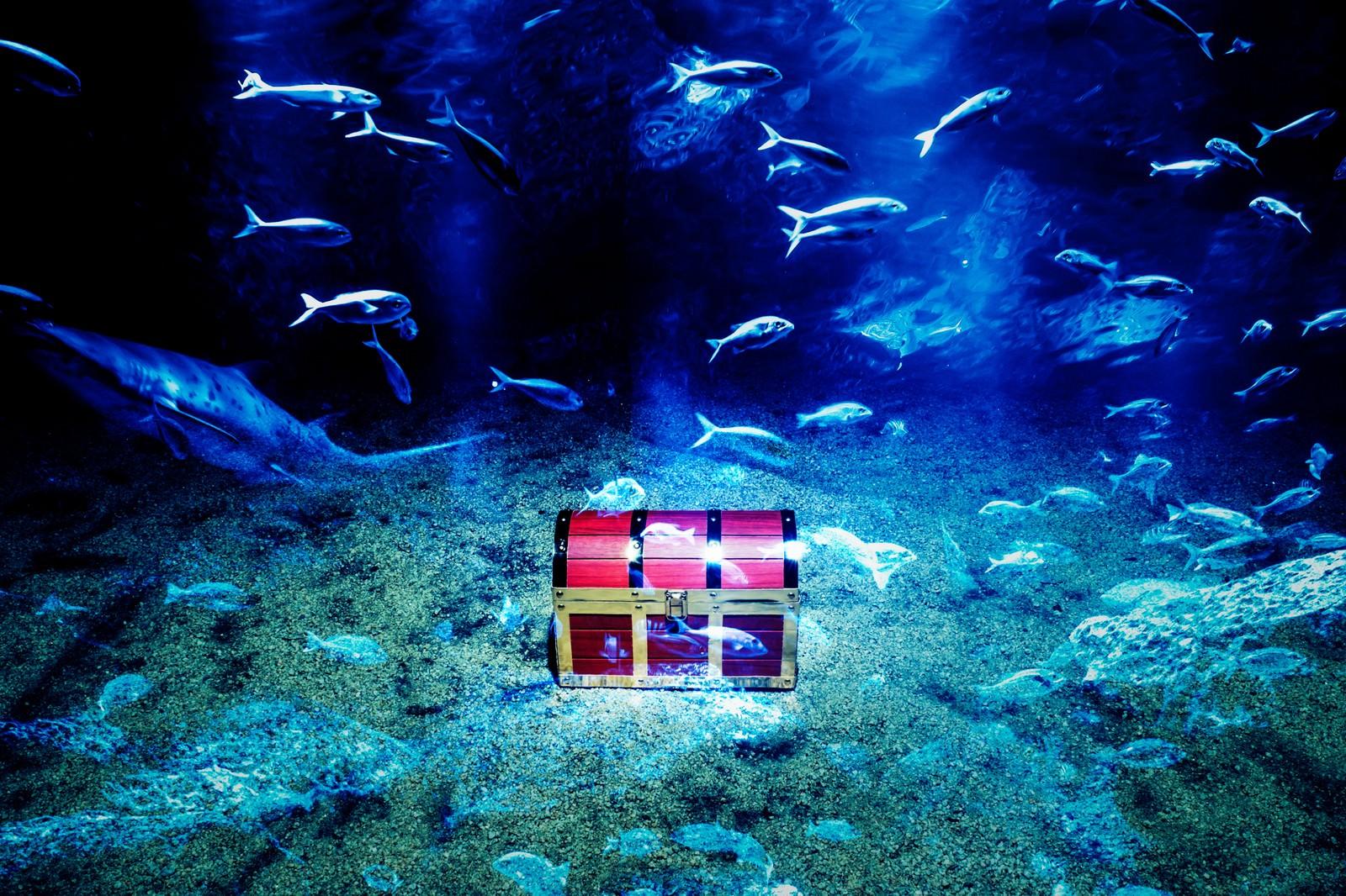 「海底に眠る伝説の秘宝」の写真
