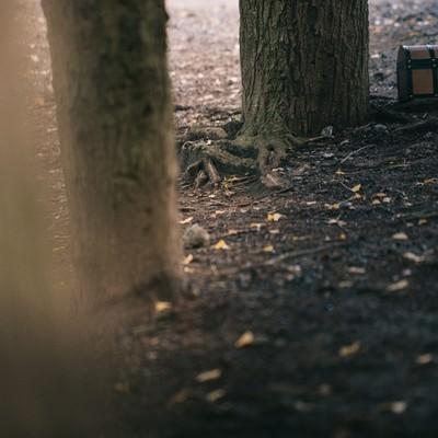 「隠れた財宝」の写真素材