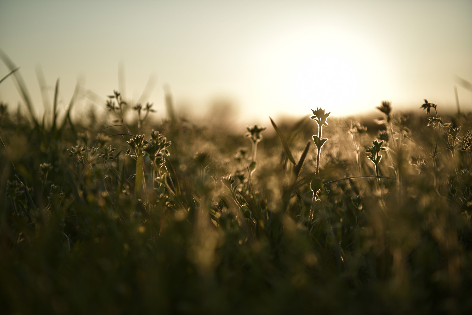「夕日に彩られるドラマチックな雑草」の写真