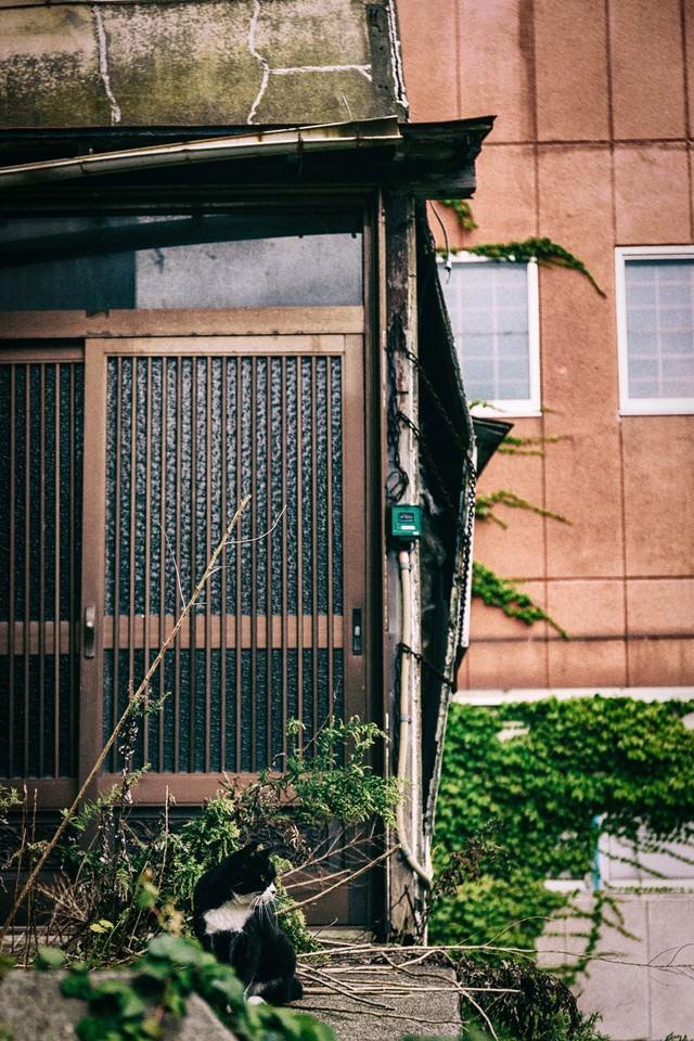 廃屋の玄関とヌコの写真