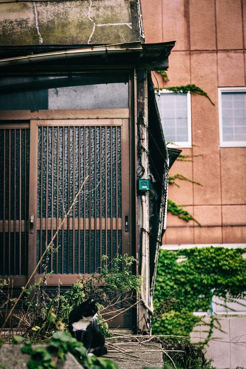 「廃屋の玄関とヌコ」の写真