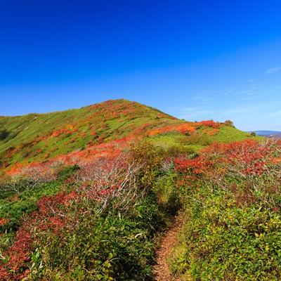 秋の山歩き(紅葉する森林限界)の写真