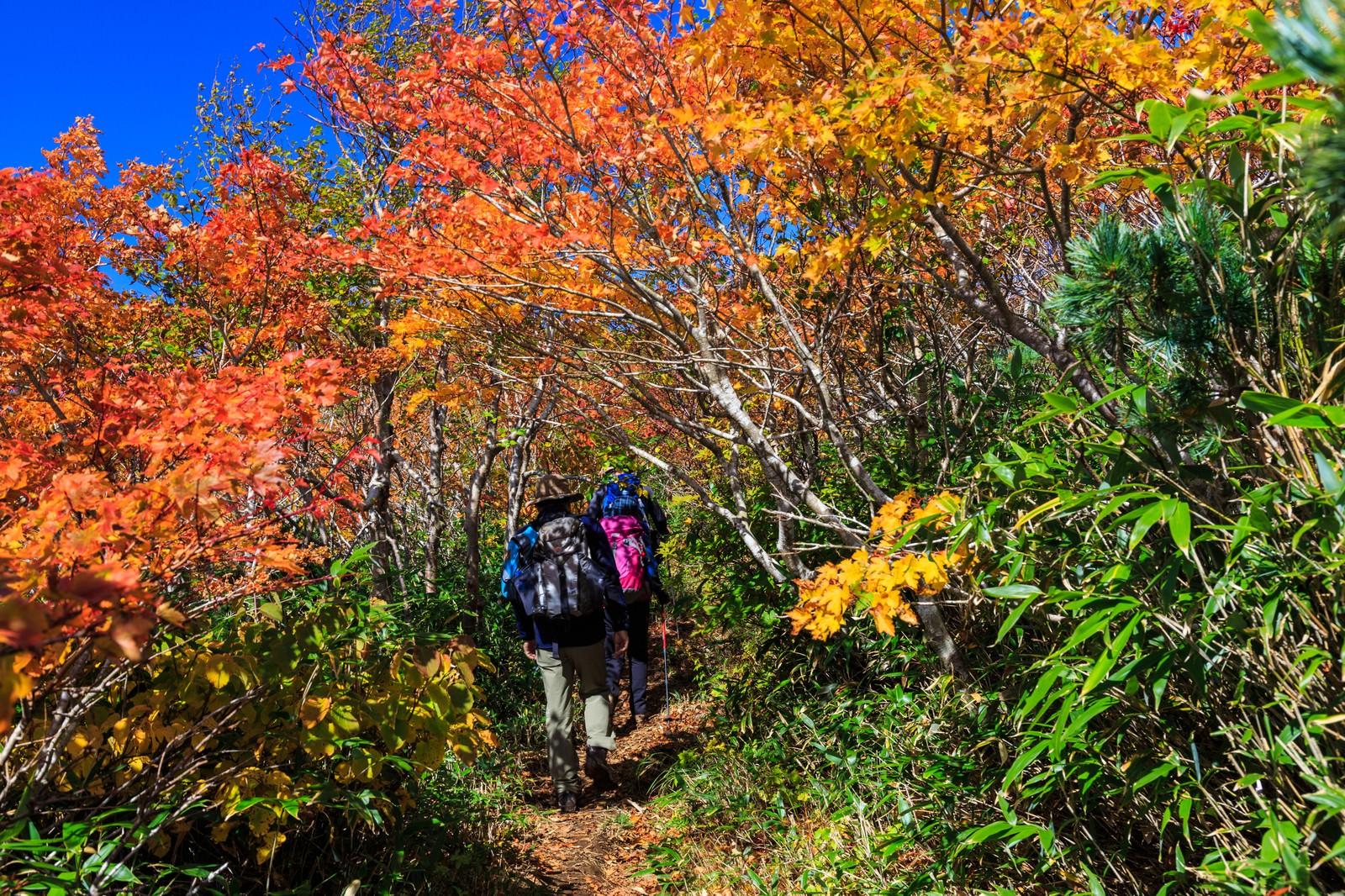 「秋の山歩き(登山)」の写真