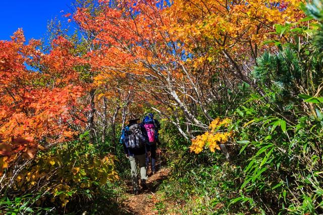 秋の山歩き(登山)の写真