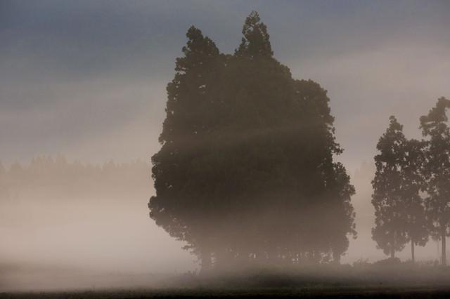 霧の中の木立の写真