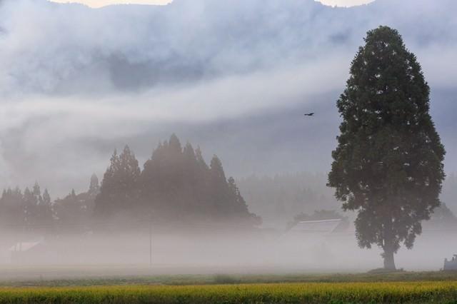 霧に包まれる農村の朝の写真