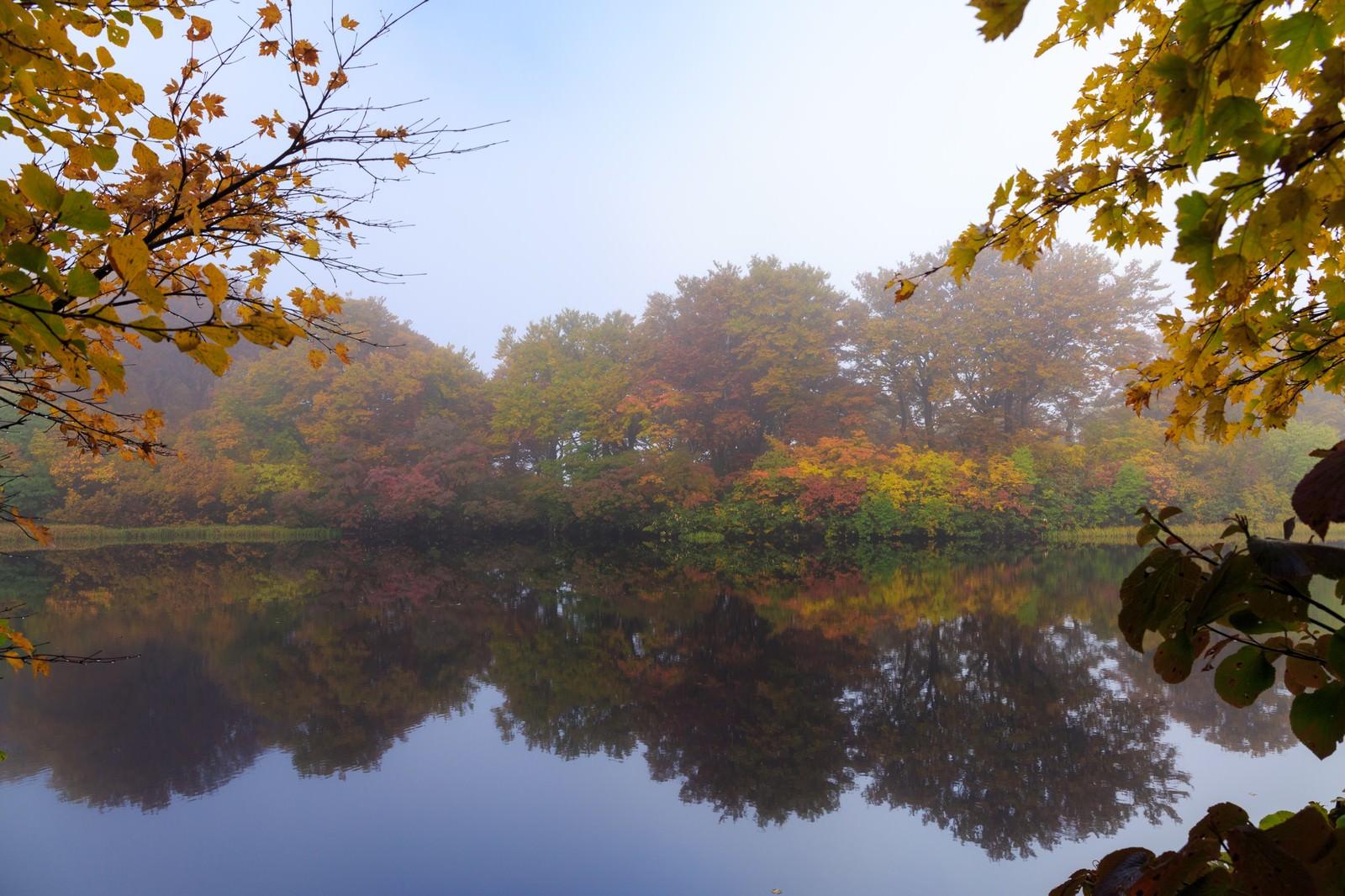 「色づく善神沼の紅葉色づく善神沼の紅葉」のフリー写真素材を拡大