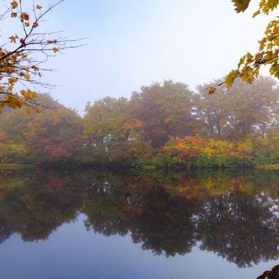 色づく善神沼の黄葉の写真