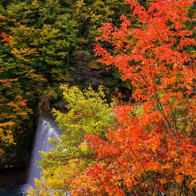 色づきはじめる八幡平の紅葉の写真