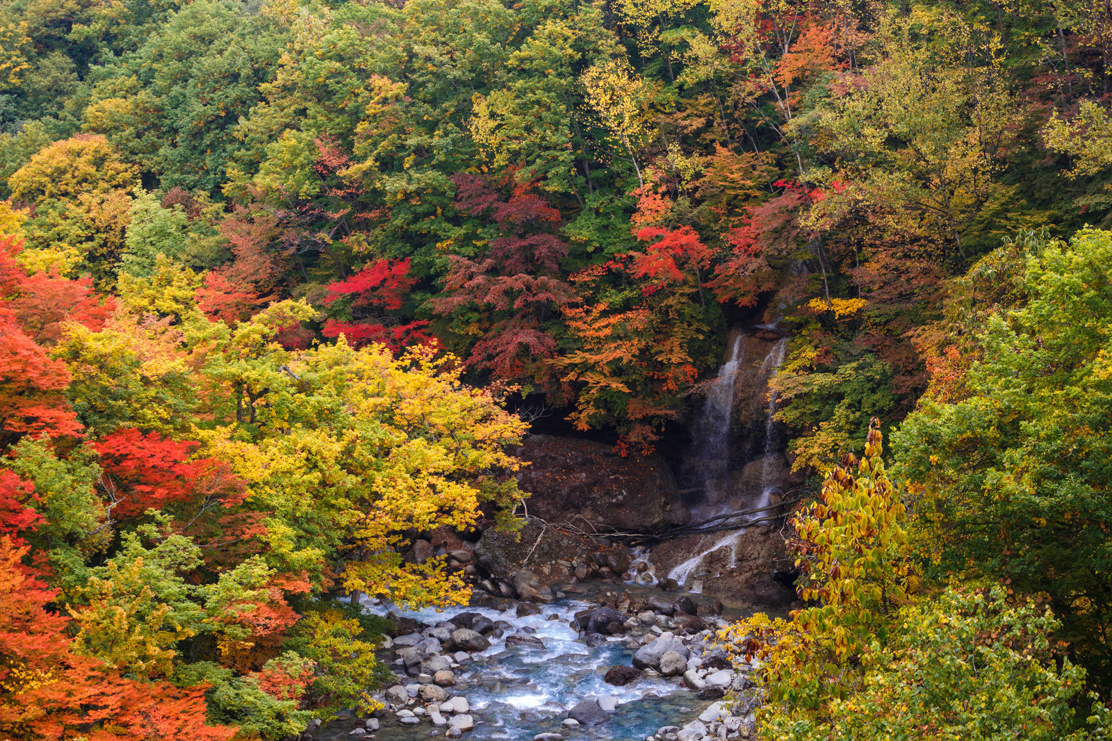 「八幡平の紅葉渓谷」の写真