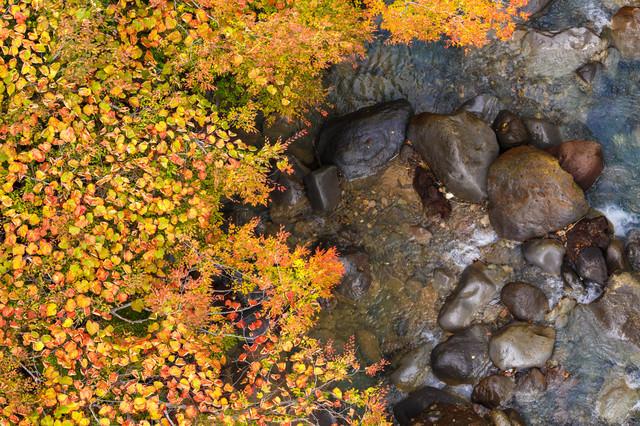 紅葉する葉と渓流の岩の写真