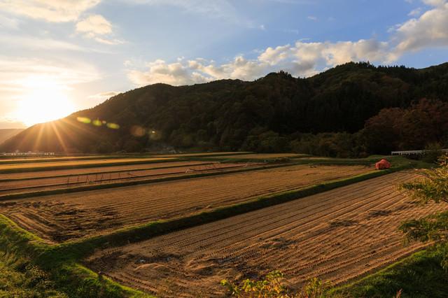 稲刈り後の田んぼ(夕焼け)の写真