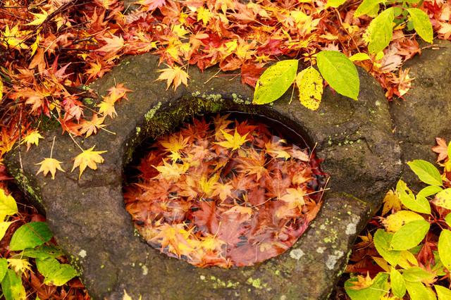 紅葉した沈む落ち葉の写真
