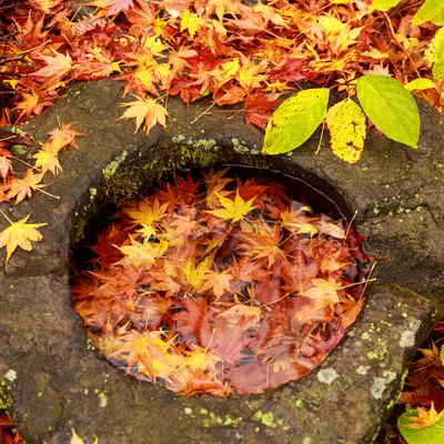 「紅葉した沈む落ち葉」の写真素材