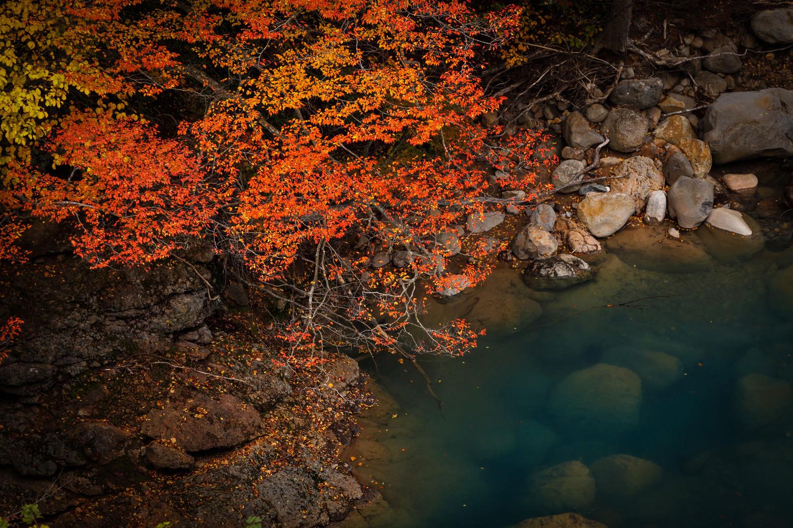 「河川と紅葉」の写真