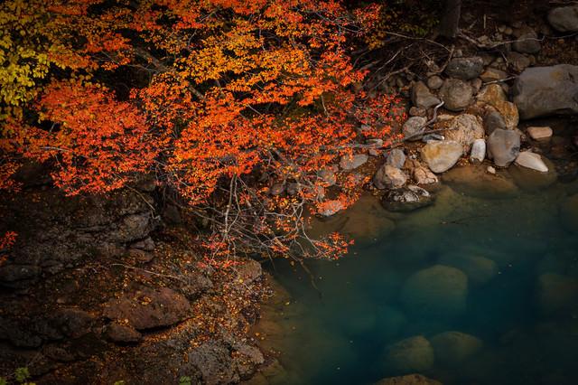河川と紅葉の写真