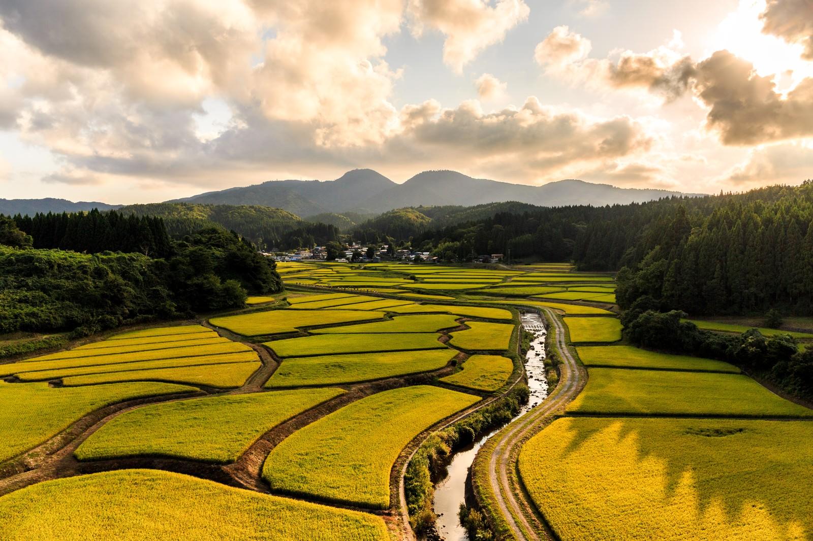 「地形に沿った田んぼがパズルのように美しい」の写真