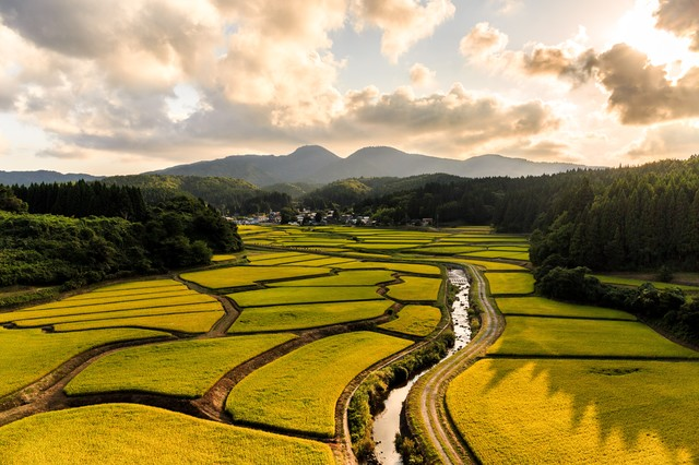 地形に沿った田んぼがパズルのように美しいの写真