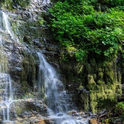 滝の沢三十三観音(苔むす仏像たち)の写真