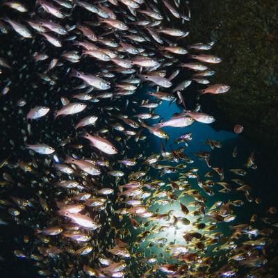 群れで泳ぐキンメモドキの写真