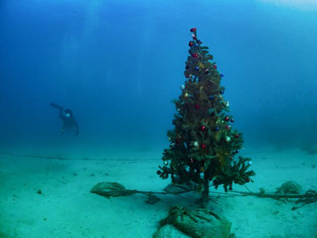海中のクリスマスツリーの写真