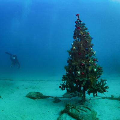 「海中のクリスマスツリー」の写真素材