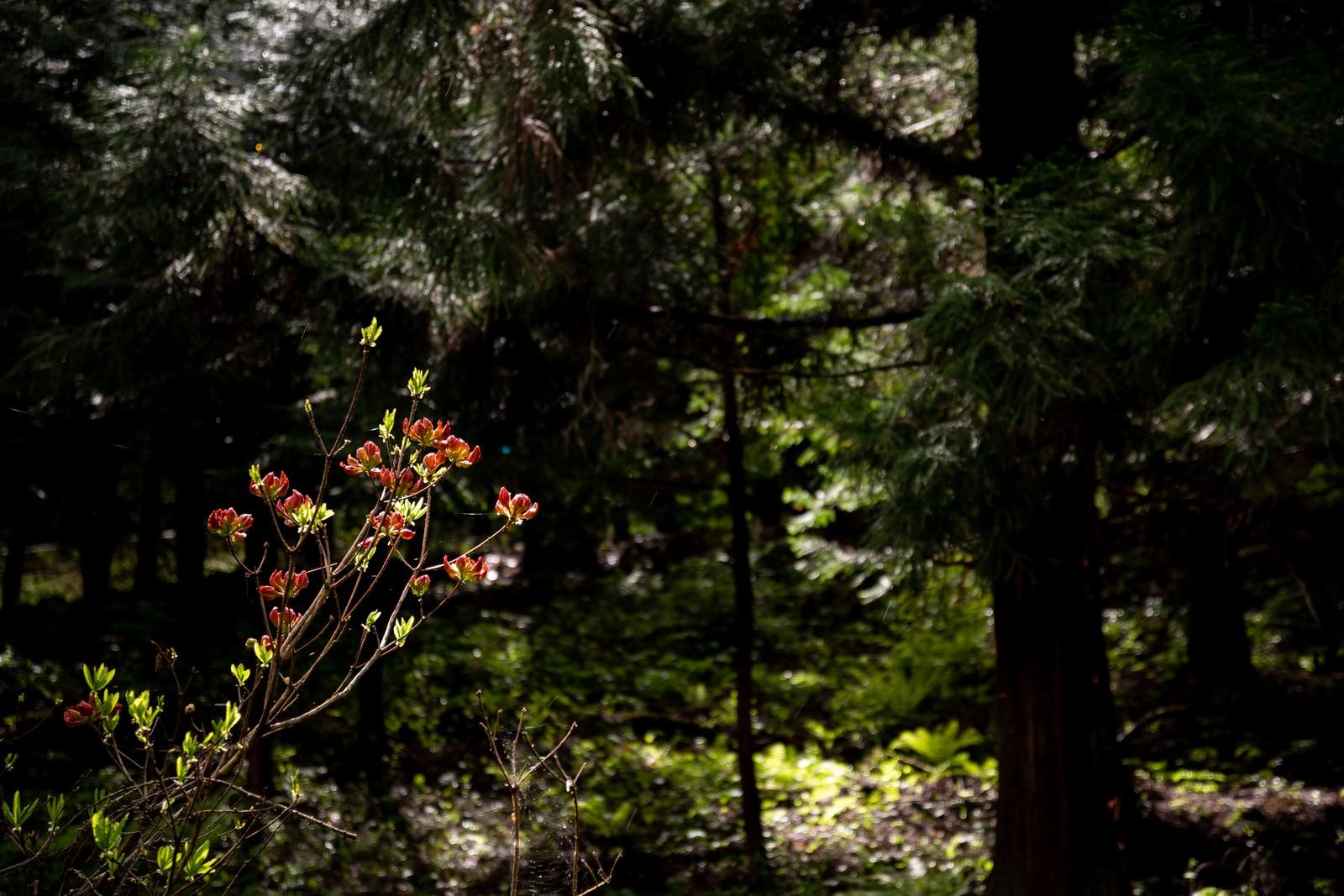 「森の中で咲く花」の写真