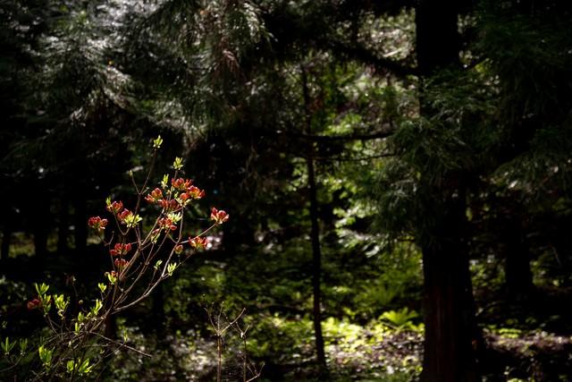 森の中で咲く花の写真