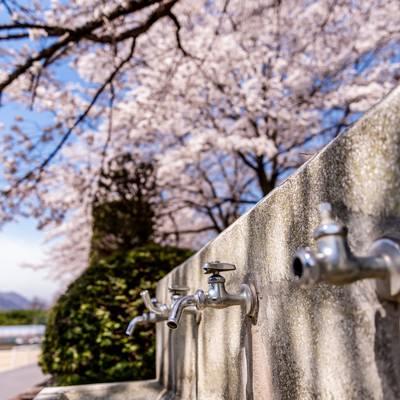 満開の桜の下にある水飲み場(武石グラウンド)の写真