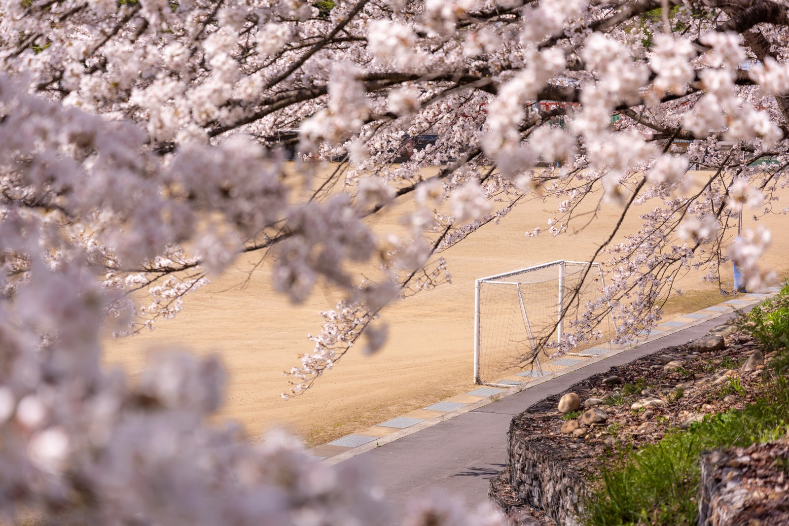 「満開の桜とゴールポスト(武石グラウンド)」の写真