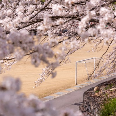 満開の桜とゴールポスト(武石グラウンド)の写真
