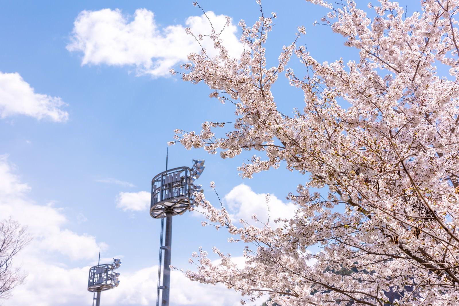 「武石グラウンドの照明設備と満開の桜」の写真