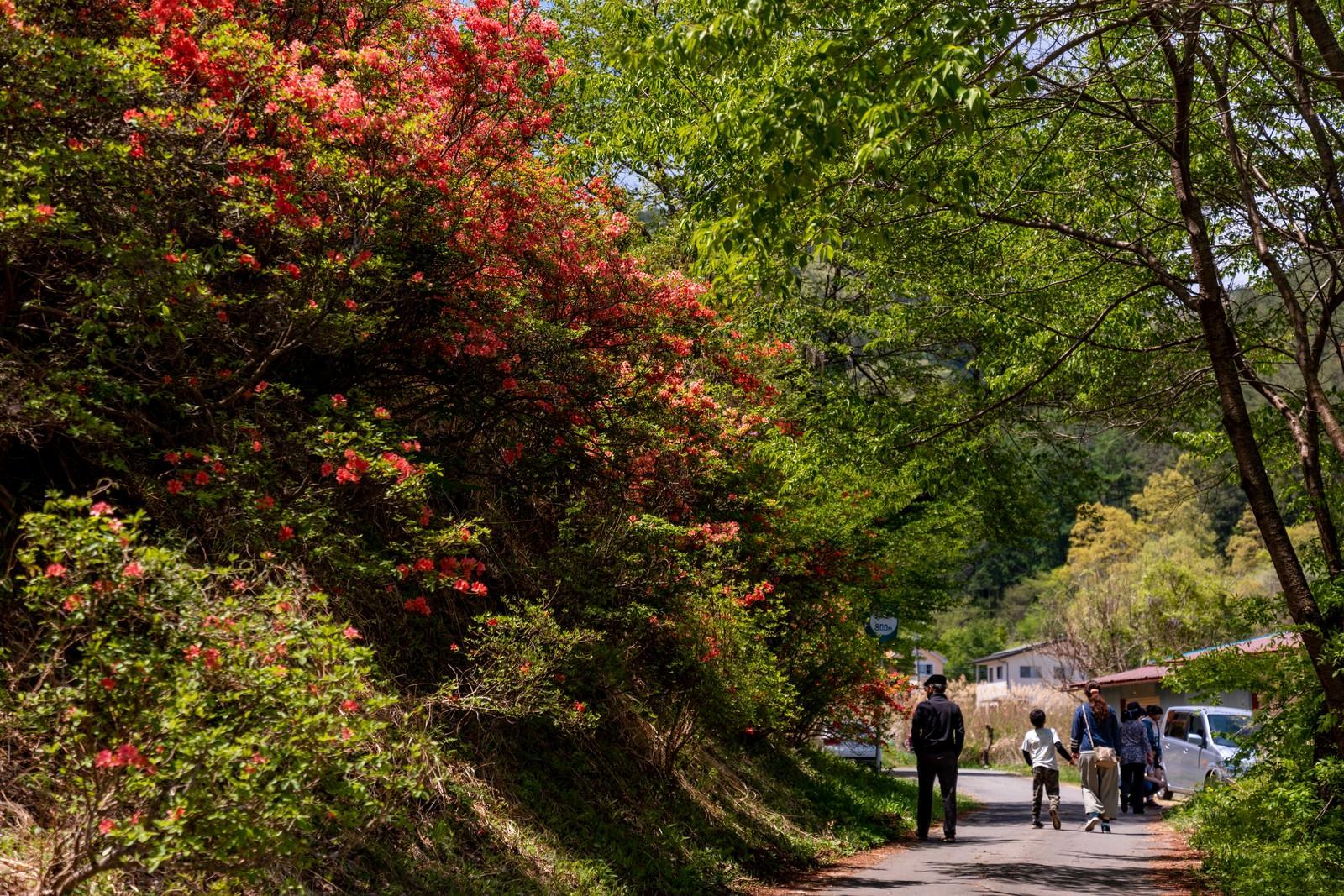 「武石公園のツツジを見に来る観光客」の写真