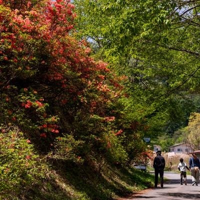 武石公園のツツジを見に来る観光客の写真