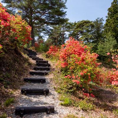 武石公園の階段沿いに咲くツツジの写真