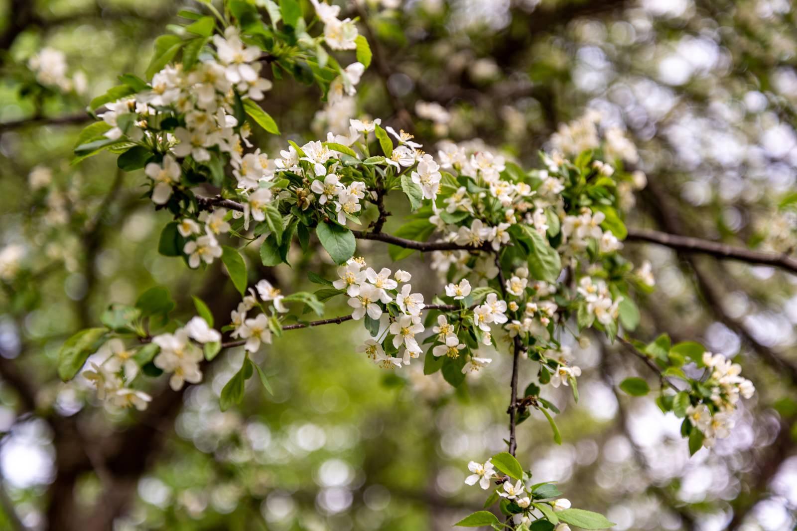 「春の開花」の写真