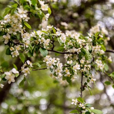 春の開花の写真